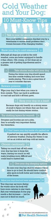 Cold weather tips for dogs. Learn more here