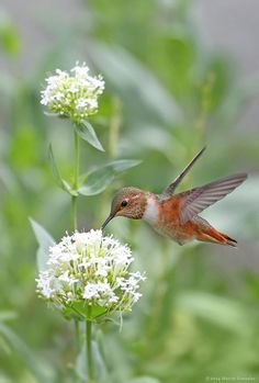 The Lord still allows me to see these sweet hummingbirds.  My mom enjoyed watching them so much.