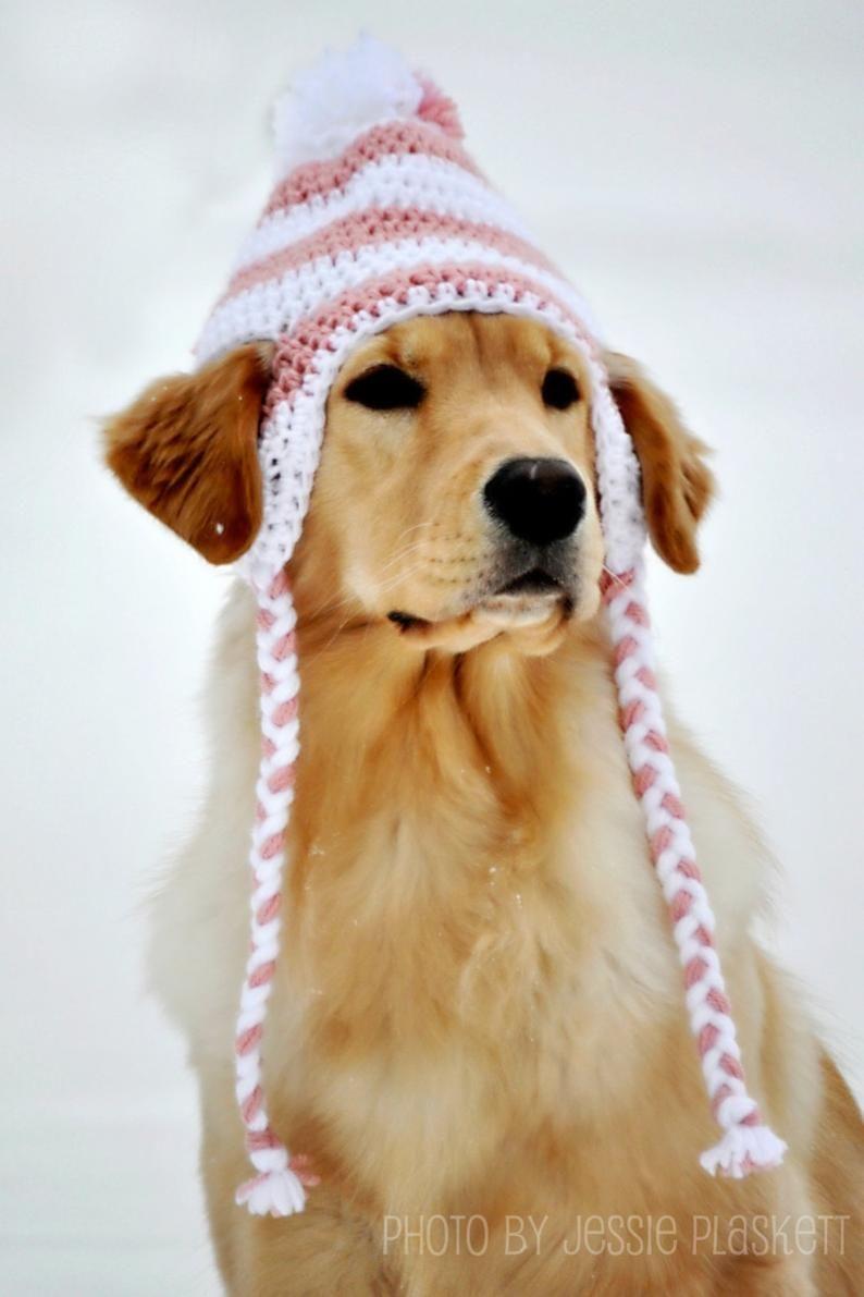 Crochet Doggie Hat Pdf Pattern For Large Dogs Etsy In 2021 Crochet Dog Hat Crochet Dog Dog Sweaters