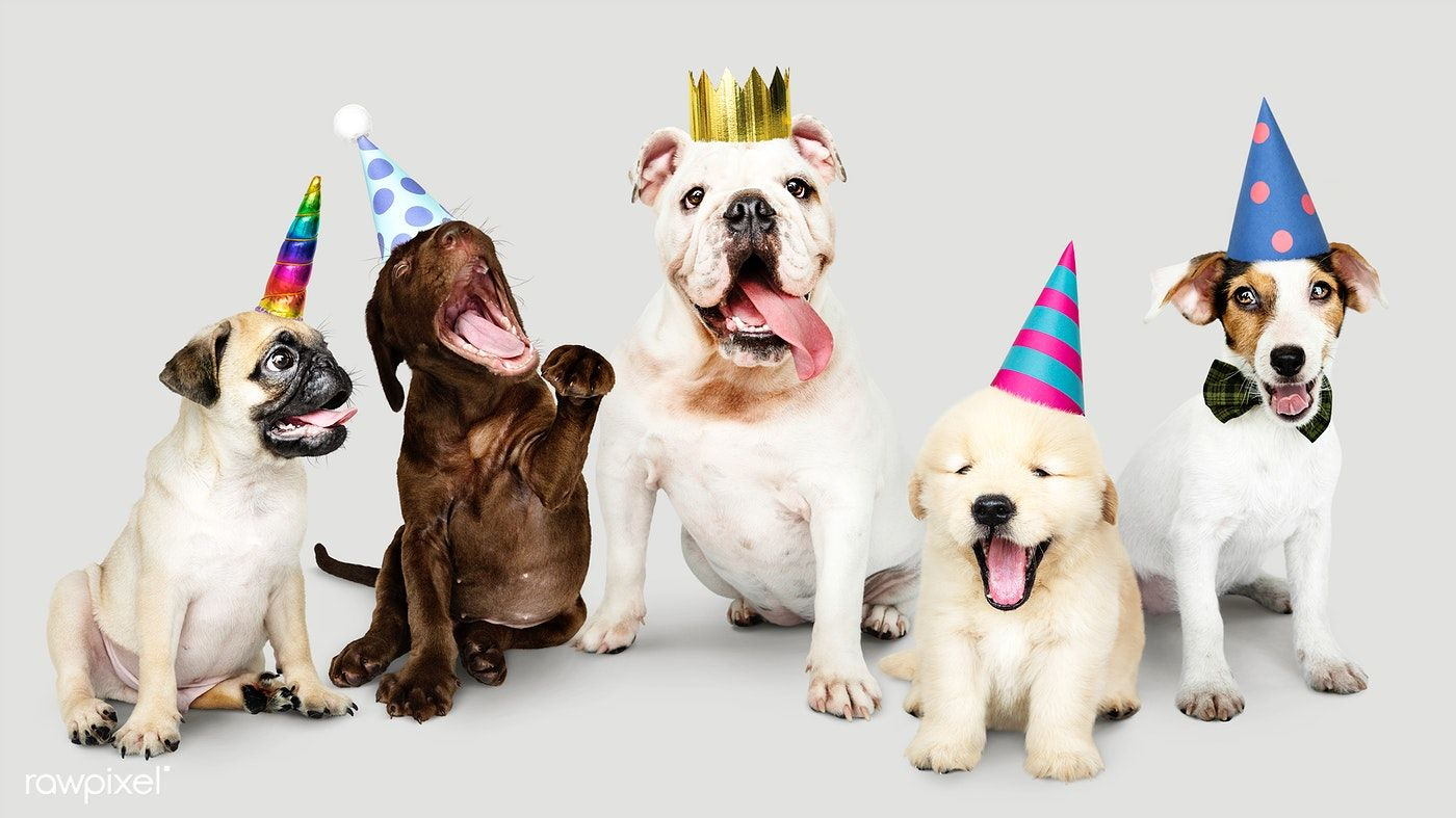 Download Premium Psd Of Group Of Puppies Celebrating New Year Together Happy Birthday Dog Cute Happy Birthday Puppies