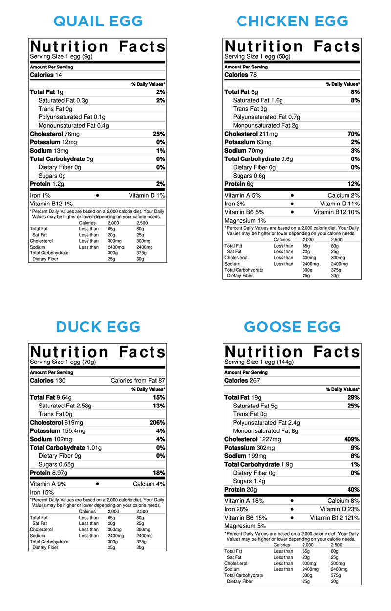 all you need to know about duck eggs nutrition benefits raising ducks and hatching duck eggs [ 800 x 1249 Pixel ]