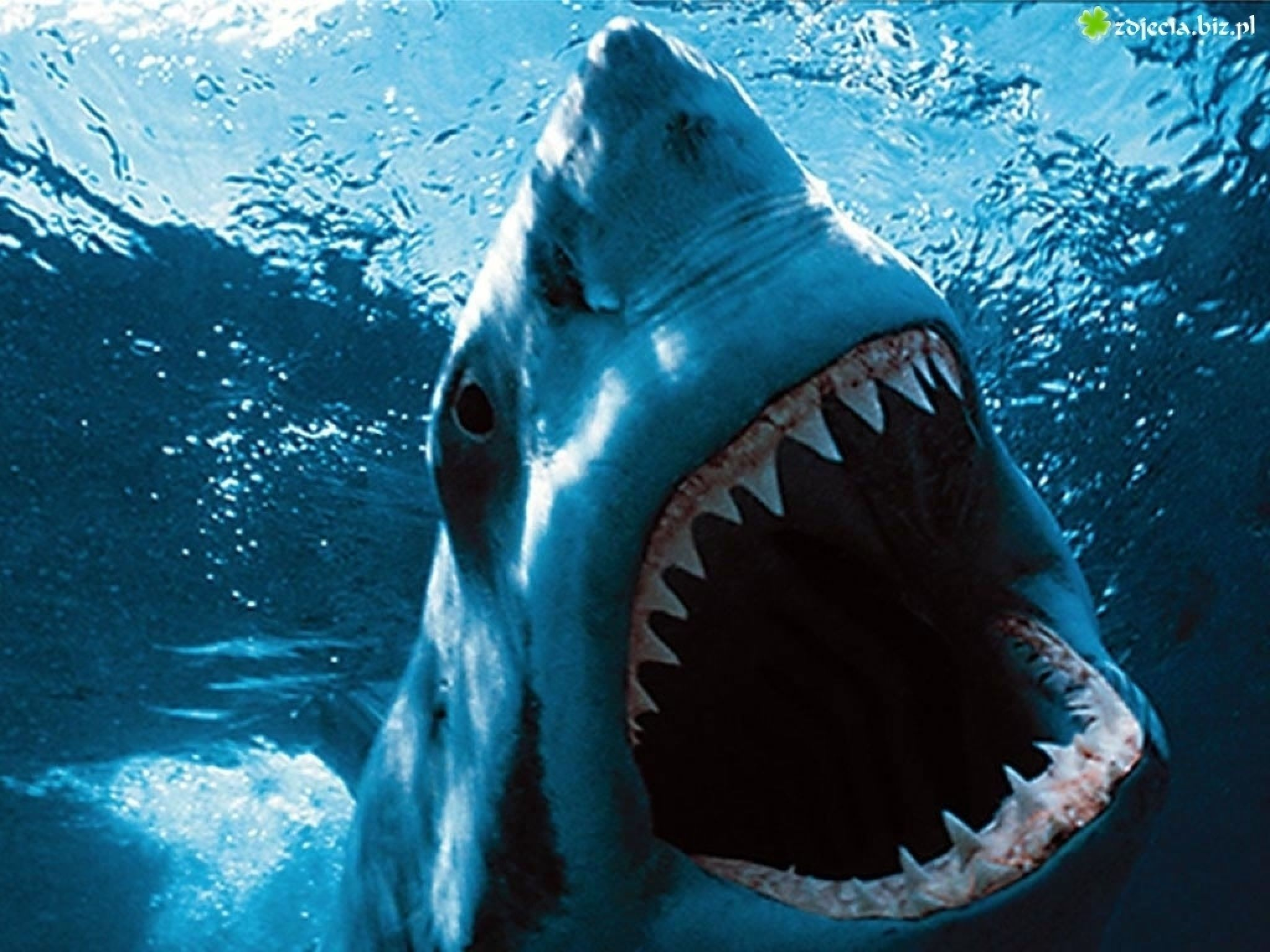 Of pictures scary sharks