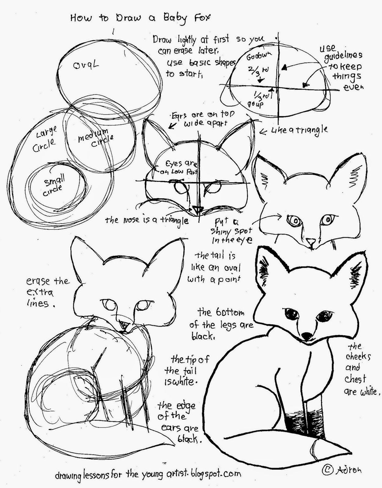 How To Draw Worksheets For The Young Artist How To Draw A Baby Fox Worksheet Free Printable Basic Drawing Animal Drawings Drawing Tutorial