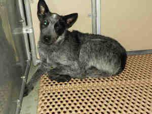 Onslow County Animal Control Jacksonville Nc 910 455 0182 Jolie