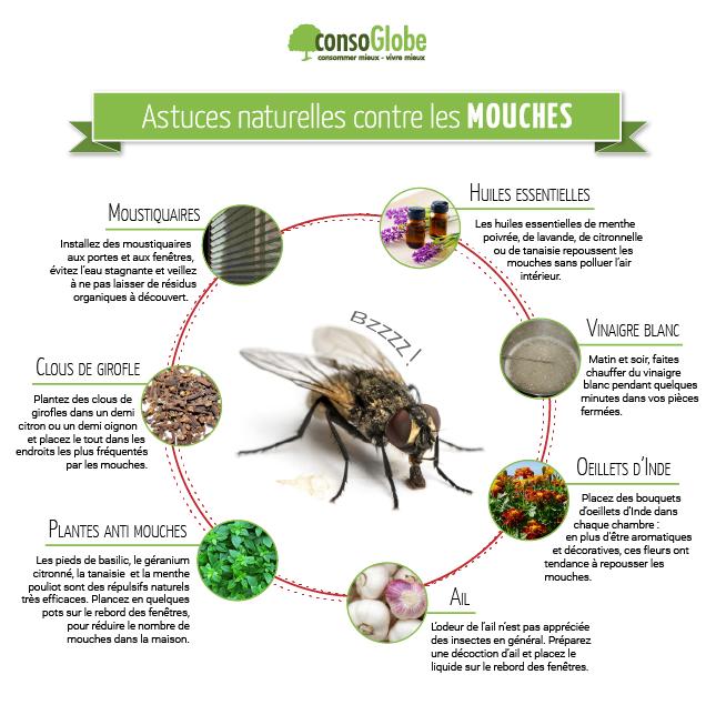 Astuces naturelles pour repousser les mouches le vinaigre l 39 ail le basilic etc produit d - Comment eradiquer les mouches ...