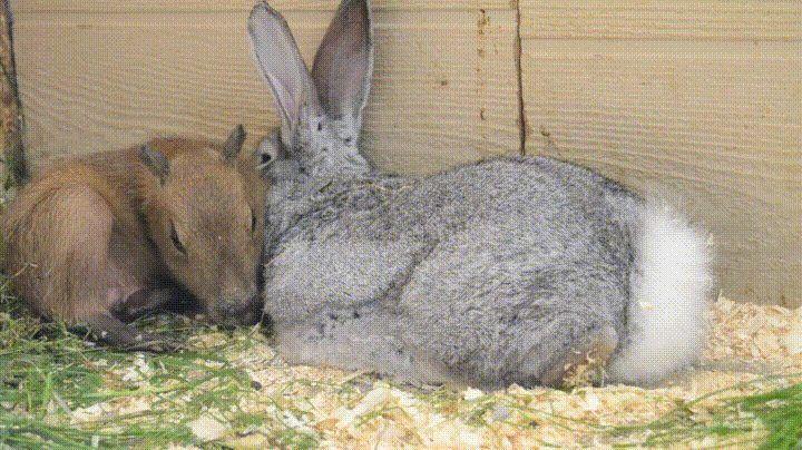 Bunnies make the best pillows httpifttt2ryp70p best