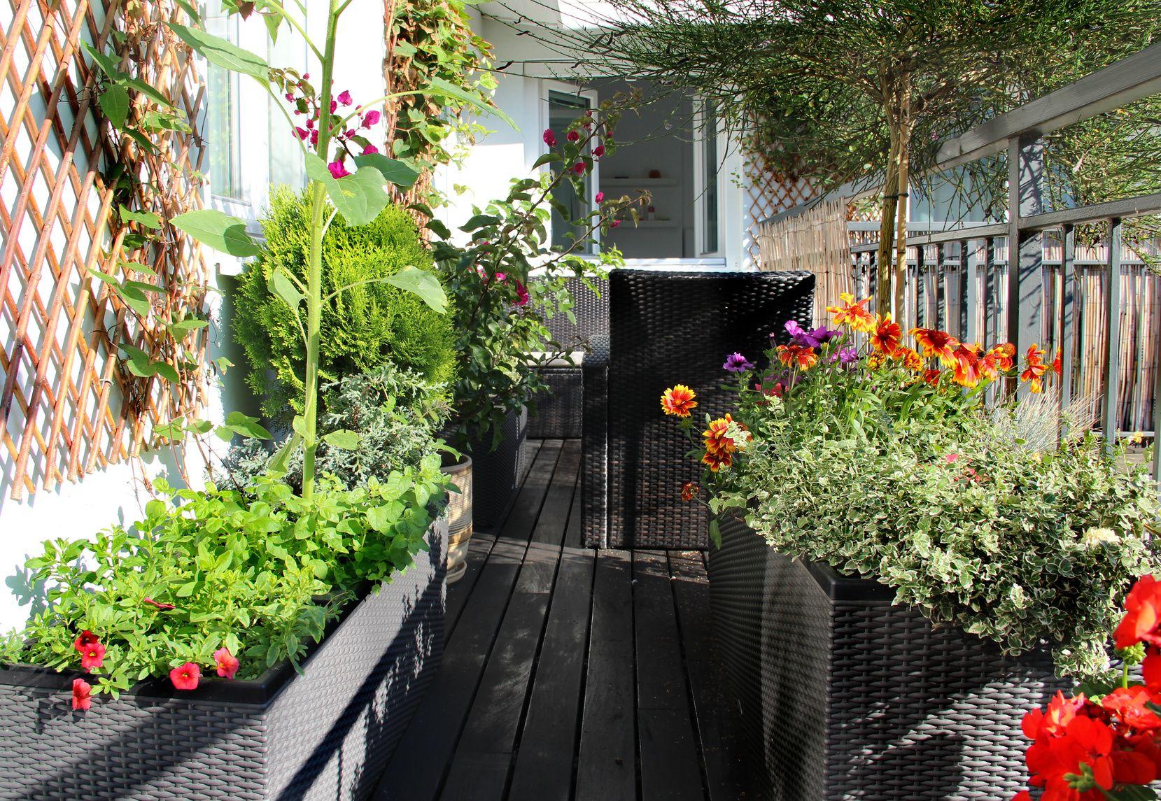 Finde die ideale Balkonpflanze für Deinen Balkon