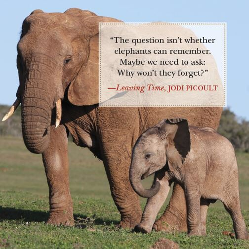 The Question Isn T Whether Elephants Can Remember Maybe We Need