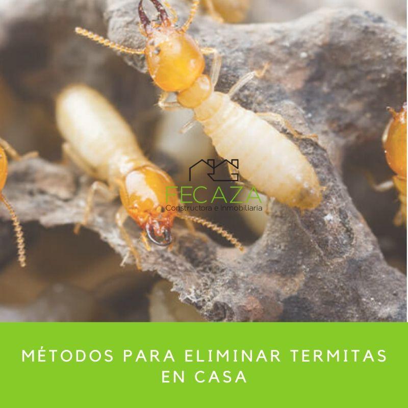 Como Acabar Con Las Termitas Mira Como Eliminar Estas Molestas Plagas De Forma Facil En 2020