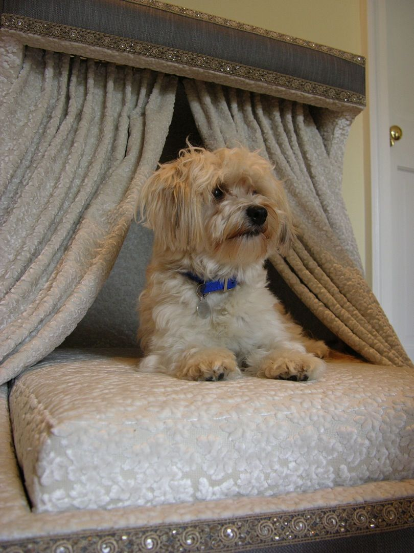Puppy Beds For Small Dogs Dog Bed For Small House Dogs By Ve Thoman Of Austin Texas