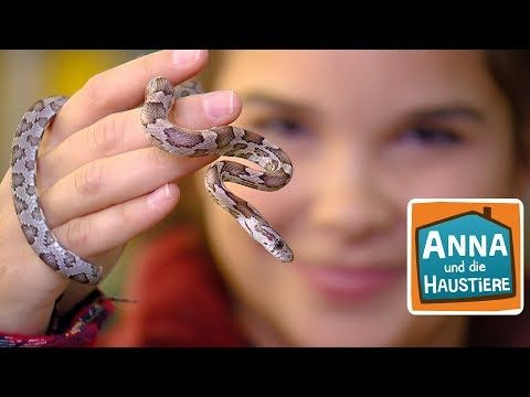 Schlange Reportage für Kinder Anna und die Haustiere