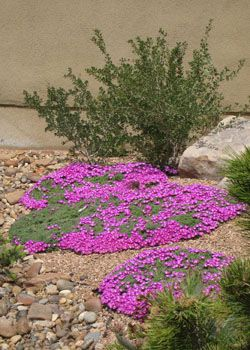 Cold Hardy Ice Plants Water Wise Landscaping High Country Gardens Plants