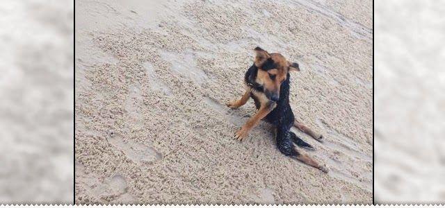 Um cãozinho paralisado e um final feliz (15 Imagens)   Hipernovas - Provavelmente, o melhor blog do universo!