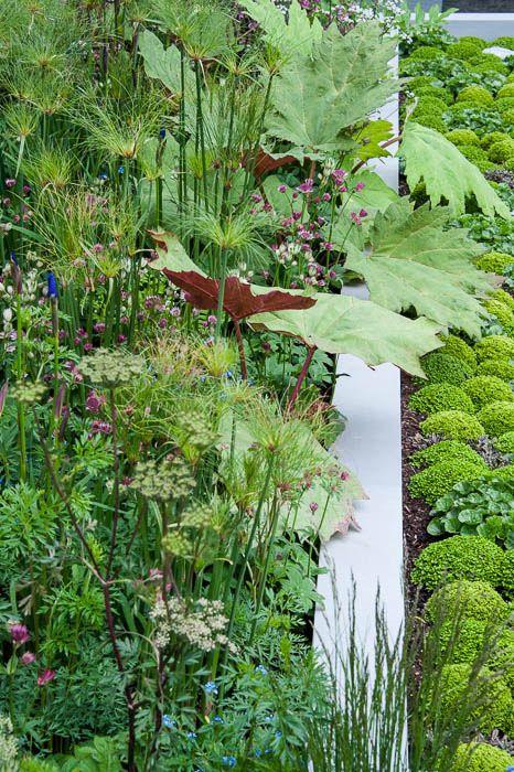 130520 183 forget me not garden pflanzen for Pflanzengestaltung garten
