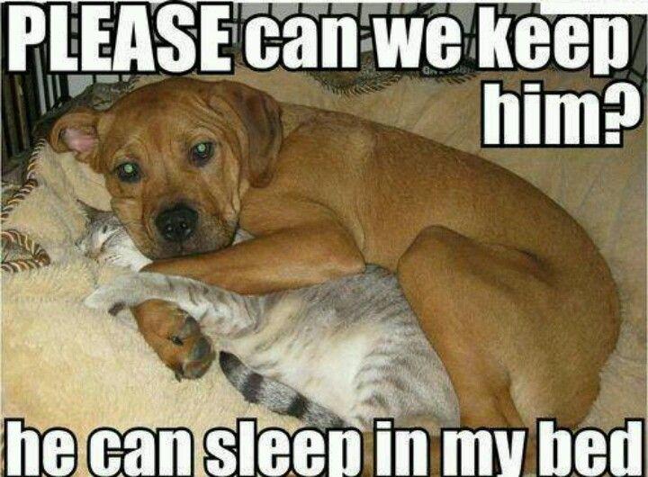 Cat & Dog Snuggle Time..
