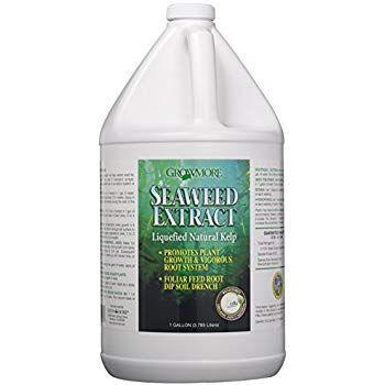 Amazon com: Liquid Kelp Organic Seaweed Fertilizer 1 Gallon: Garden