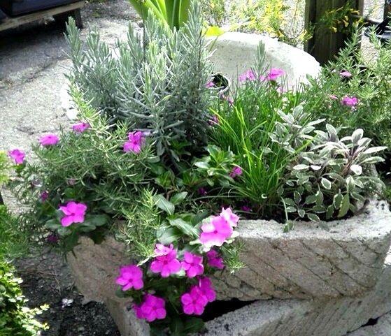 Merveilleux Trough Planter: Herbs And Trailing Vinca   Oak Street Garden Shop,  Birmingham, Al