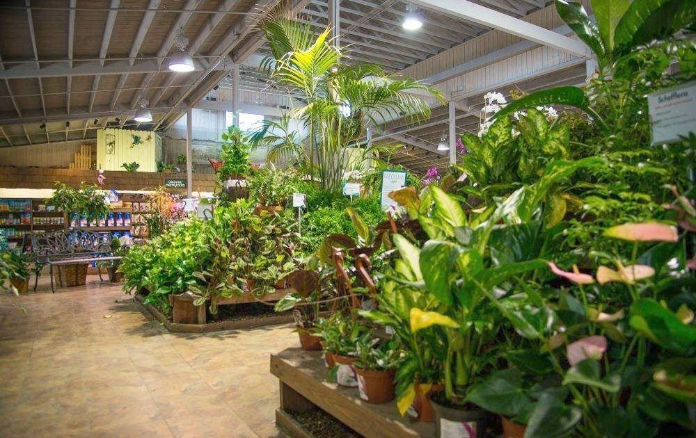 Armstrong Garden Centers Friars Road With Images California
