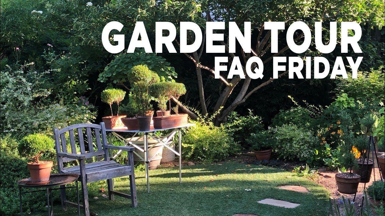 Garden Tour Back Yard Faq Friday 7 31 2020 Youtube In 2020 Garden Tours Garden Backyard Backyard garden tour youtube