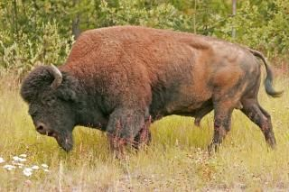 Wood Buffalo National Park - World Heritage Site - Pictures, info ...