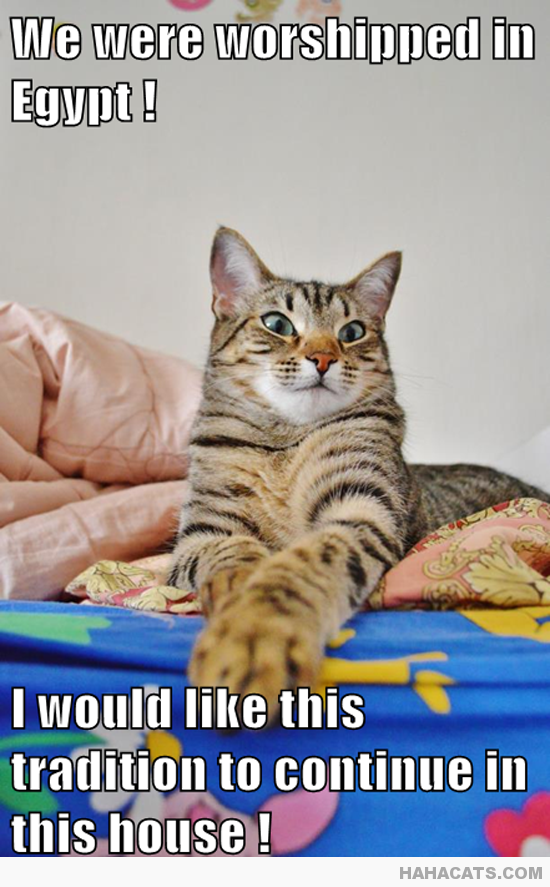 Is That so Much to Ask Funny cats, Funny cat memes