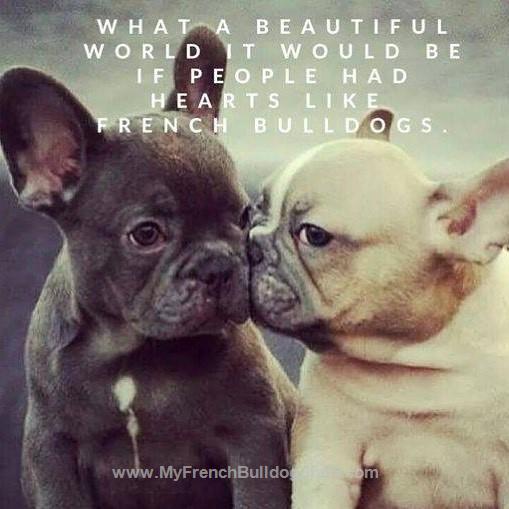 If people had hearts like French Bulldogs. | French bulldog ...