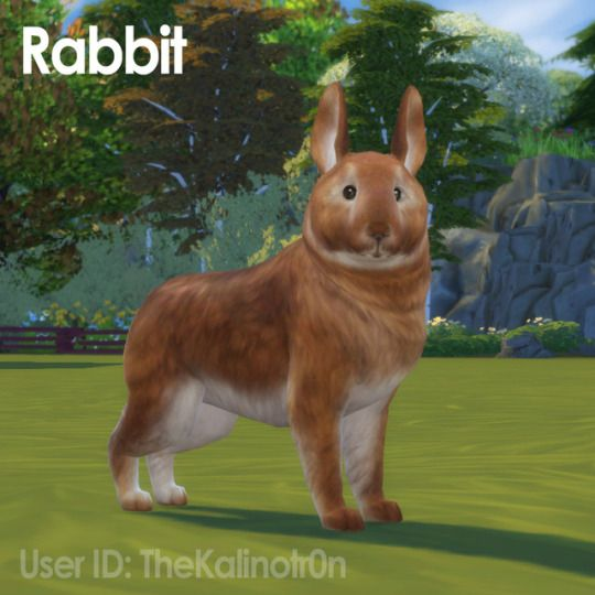 Kalino Sims Pets Sims 4 Pets Sims 4