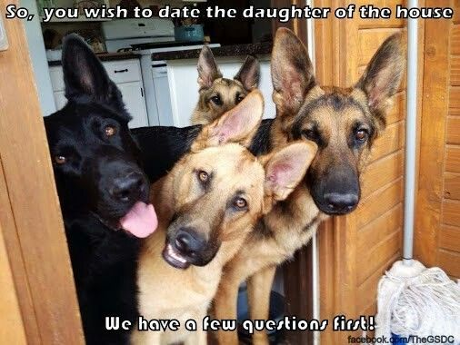 Maybe I should get a couple more GSD's...