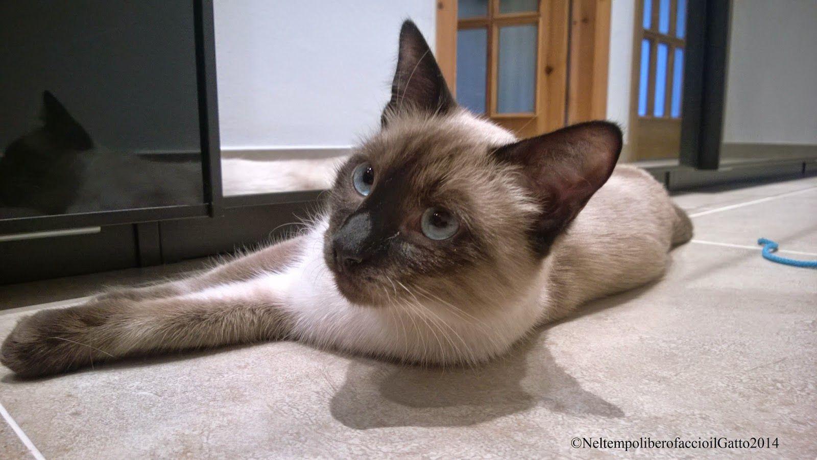 Nel tempo libero faccio il Gatto: Dietro le quinte di una foto d'autore