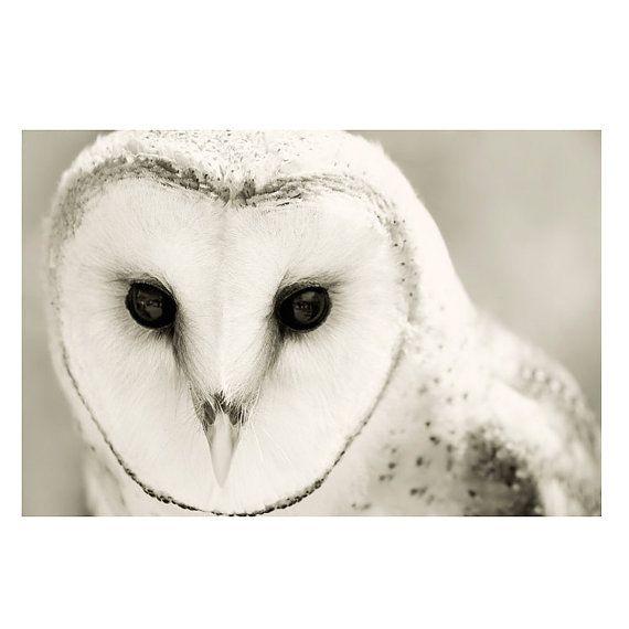 "Photo of Barn Owl Photograph Unframed / black white woodland nature home decor / vanilla cream minimal / photography print / ""Whiter Shade of Pale"""