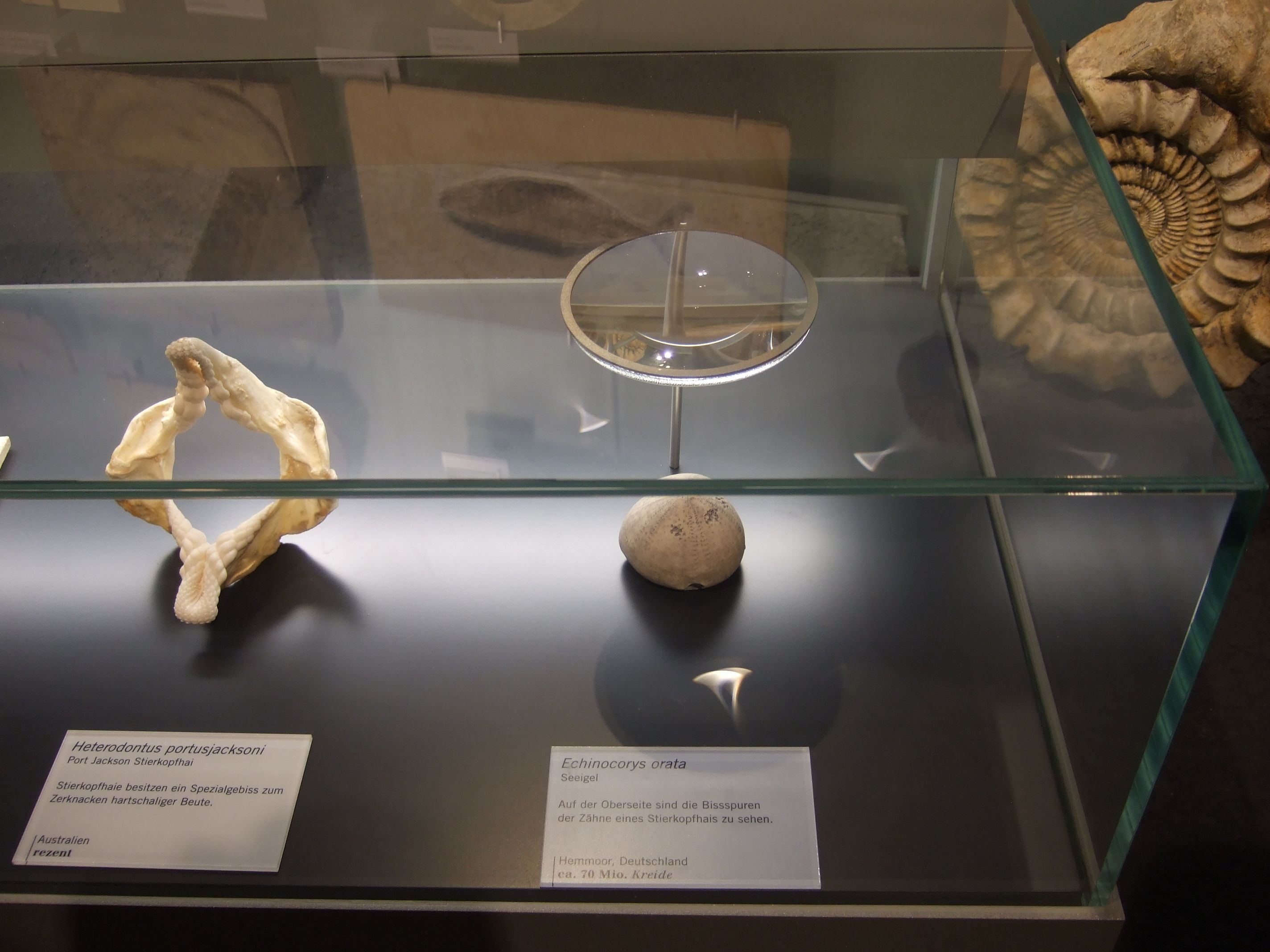 Magnifying Display Cases - Google Museum Exhibits