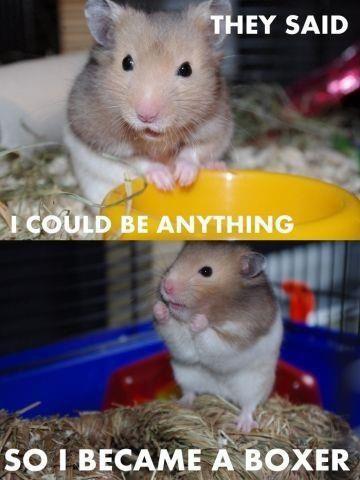 Good Move Mr Hamster Funny Hamsters Cute Animals Funny Animal Jokes