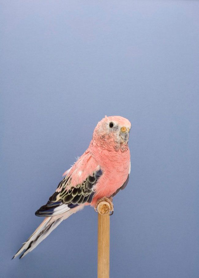 """""""The Incomplete Dictionary of Show Birds"""" series by photographer Luke Stephenson"""