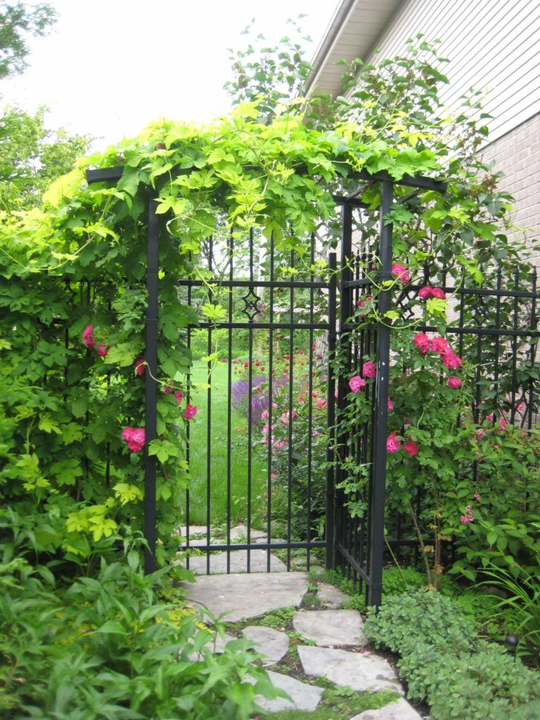 This Iron Gate And Fence Is Adorned With A Lovely Array Of Flowers And Vines Cheap Garden Fencing Backyard Cool Plants