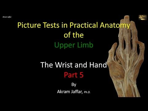 Picture test in anatomy wrist and hand 5 | Anatomy education | Pinterest