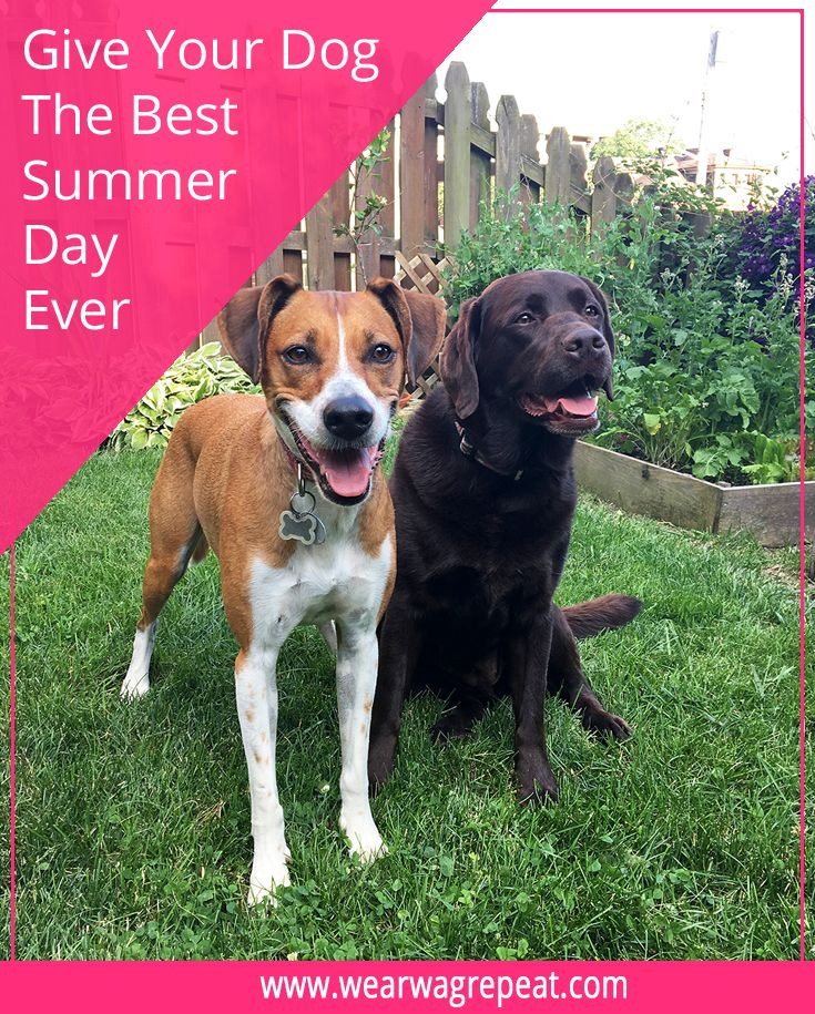 How To Give Your Dog The Best Summer Day Ever Purinamysteries
