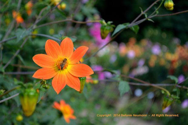 Herbststerne