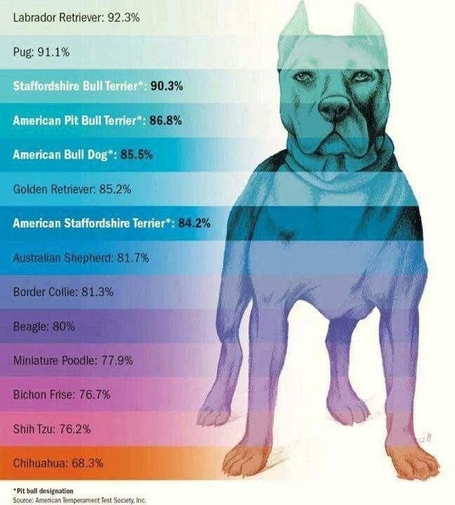 Pitt Bull Temperament Love It American Pitbull Terrier