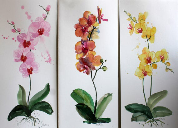 Most Recent Absolutely Free Orchids Watercolor Concepts If You Re New To Everything About Orchids Don T Be Petrified Of Them Many Orchids Is Ofte Cicek Resim