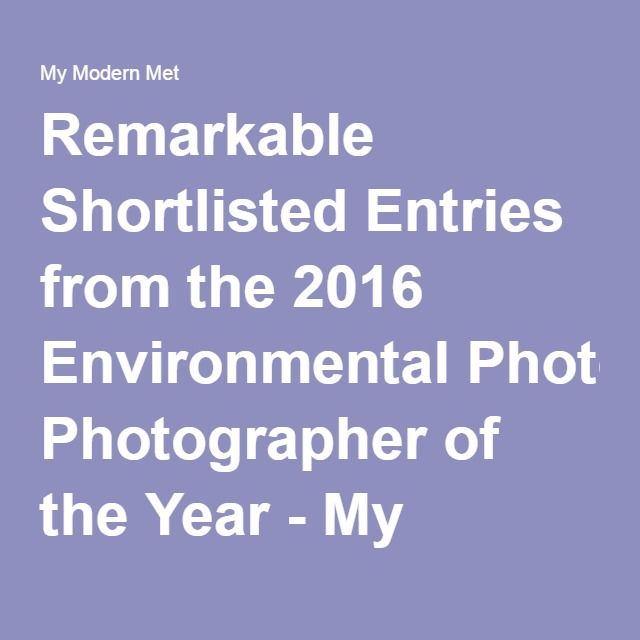 Remarkable Shortlisted Entries from the 2016 Environmental Photographer of the Year - My Modern Met