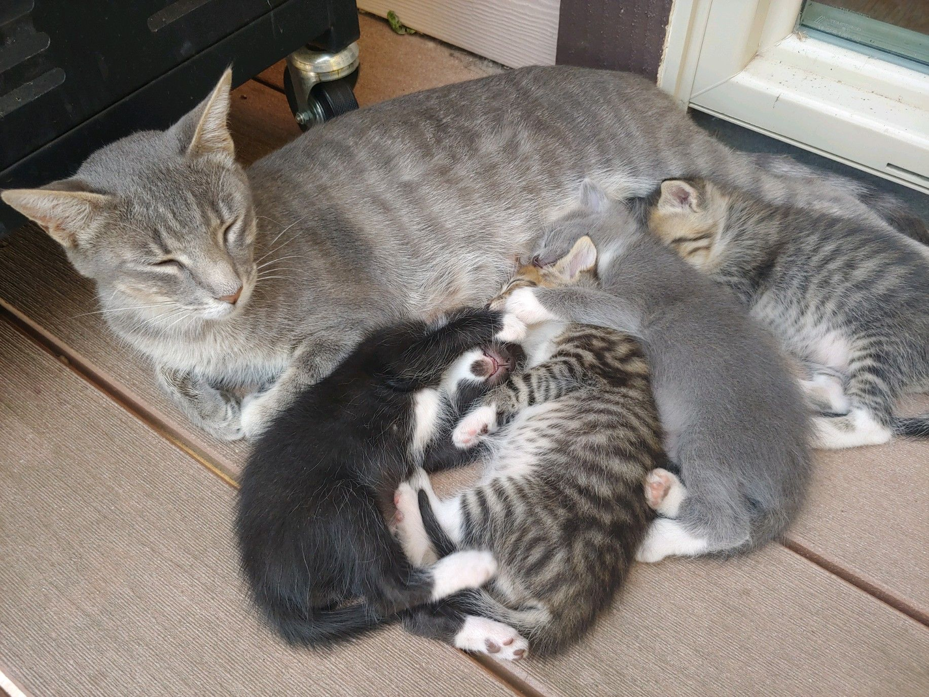 Country Kittens Redhawkrealty Weknowthebackcountry Cadre01109566 Countryliving Country Kitten Kittens Cat Real Estate Sales San Diego Farm Animals