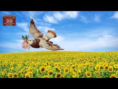 No Culpes A Nadie Reflexiones De Oro Juan Corazon Youtube Reflexiones Carta Desde El Cielo Realidades De La Vida