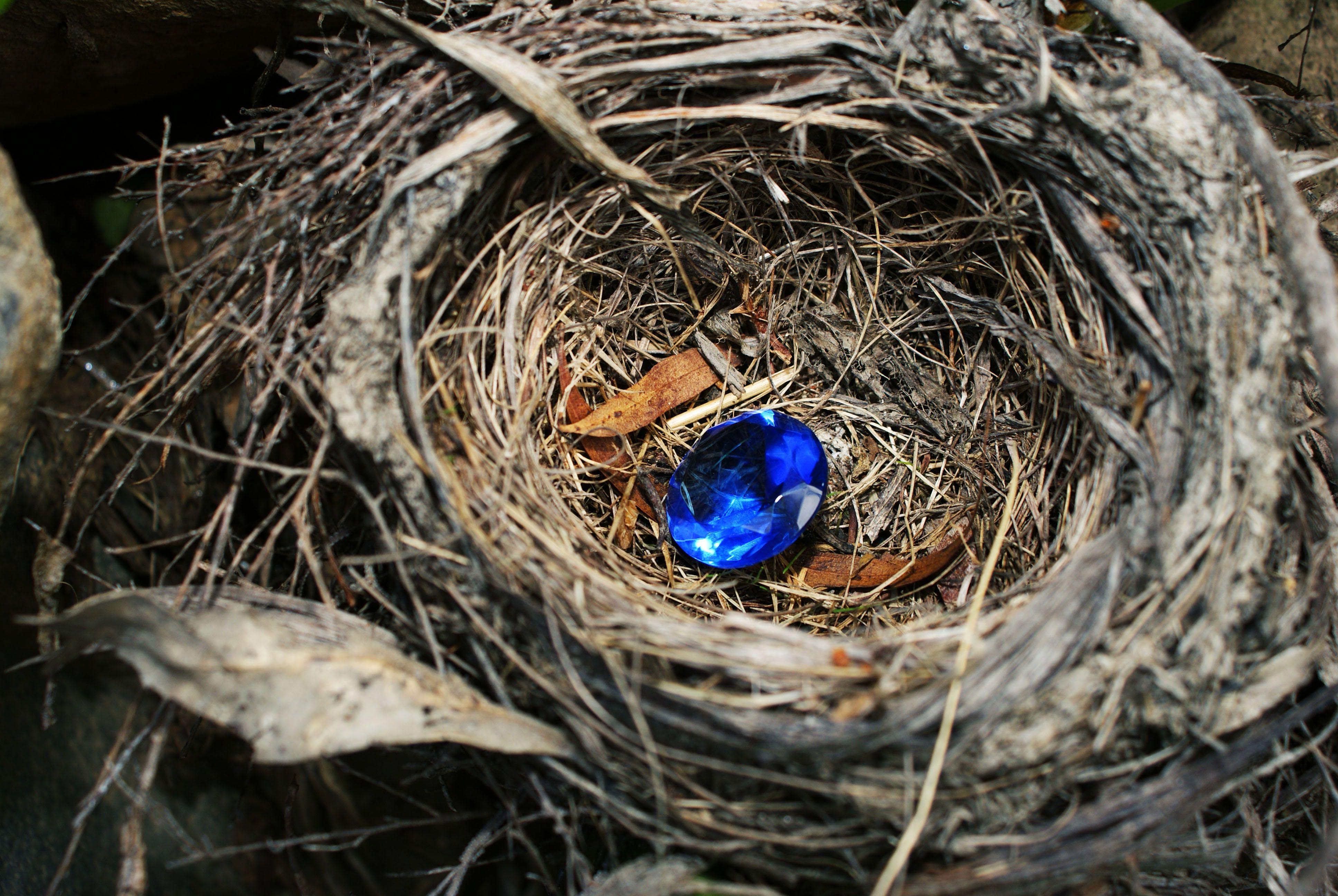 Nest. Caylee Wilson Photography