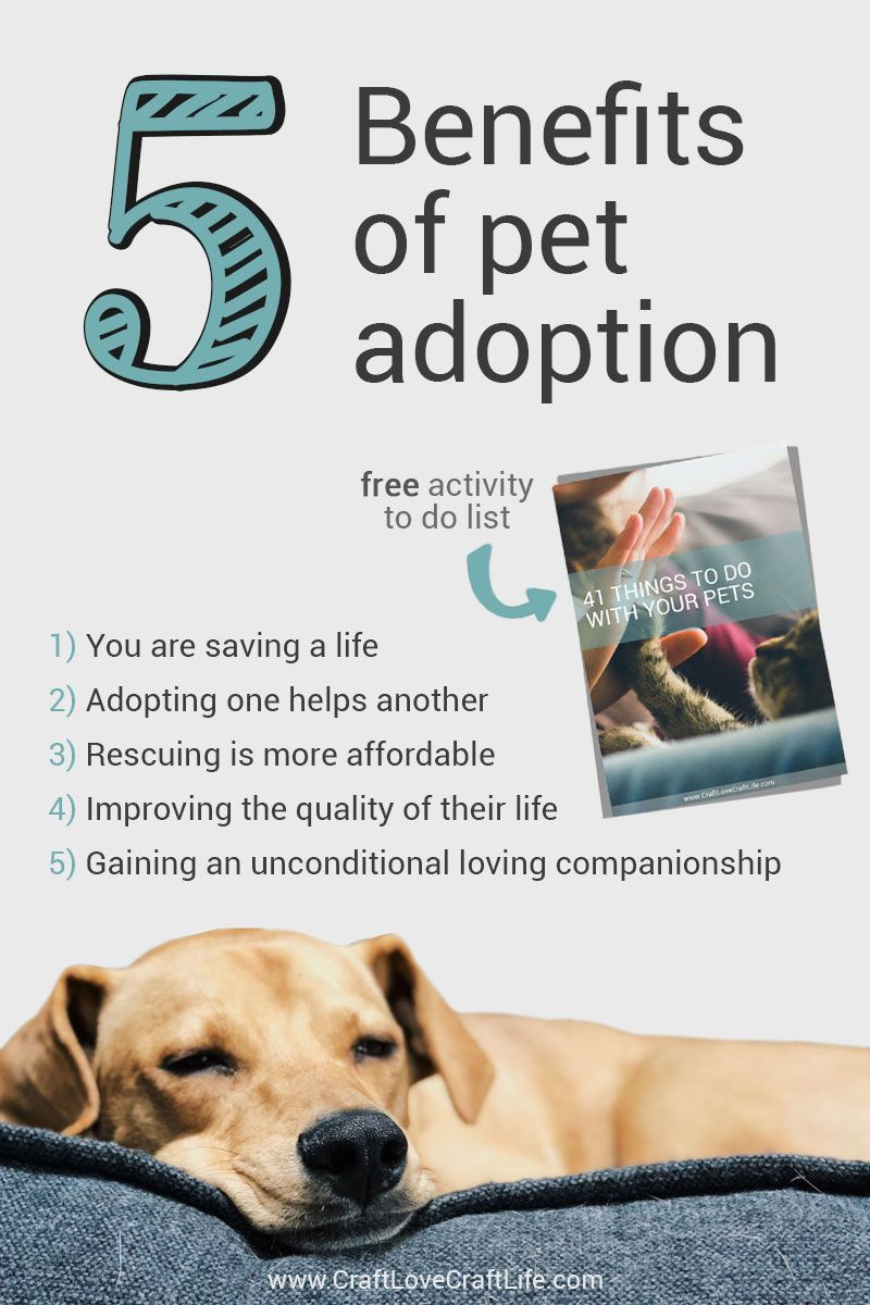 5 Benefits Of Adopting A Pet Shelter Animals Adoption Pet Adoption Pets