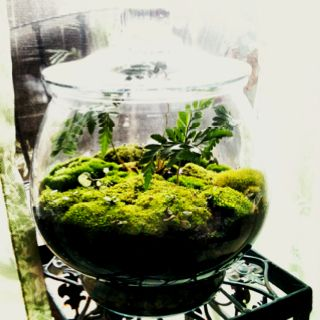Moss And Fern Terrarium Diy Layer Rocks Potting Soil And Buy A