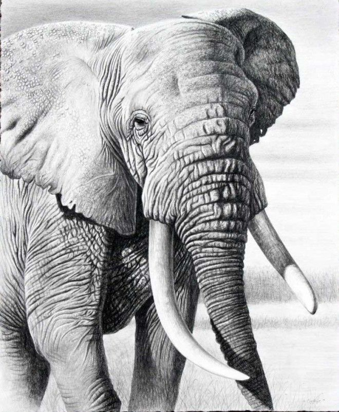 Beautiful And Realistic Animal Drawings Around The World - Stunning drawings of endangered wild animals by richard symonds