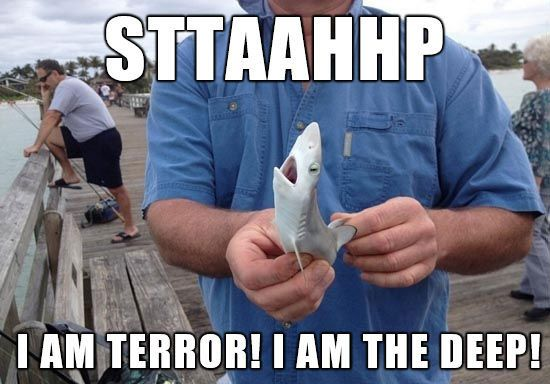 Shark attack:   21 Photos Guaranteed To Make You Laugh Every Time