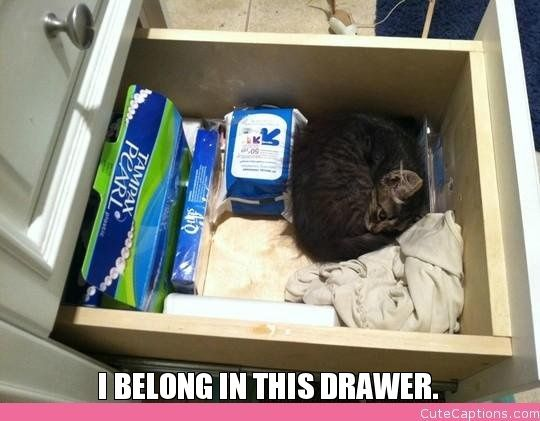 I Belong in This Drawer.