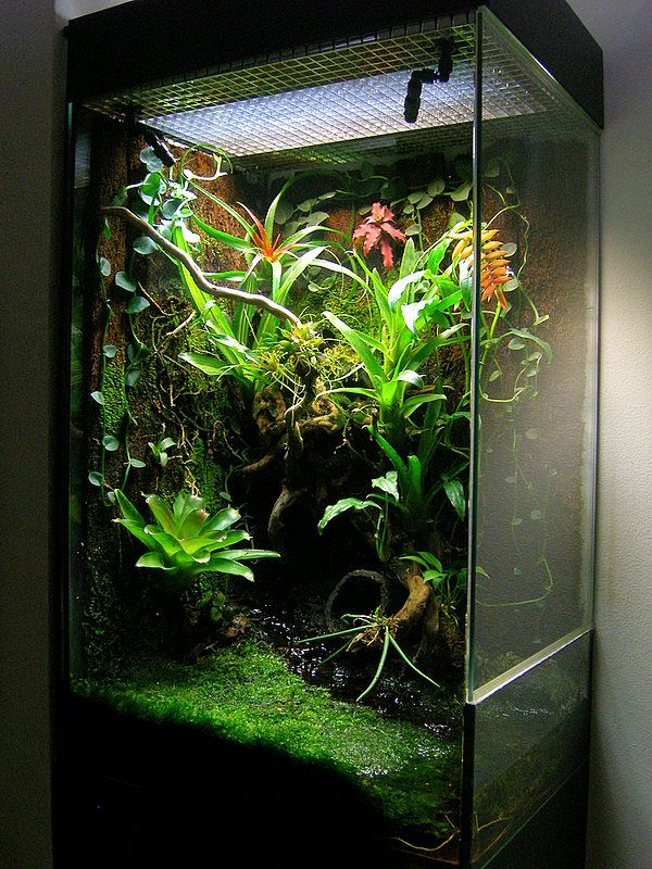 click the image to open in full size vivarium terrarium pinterest terrarium poisson. Black Bedroom Furniture Sets. Home Design Ideas