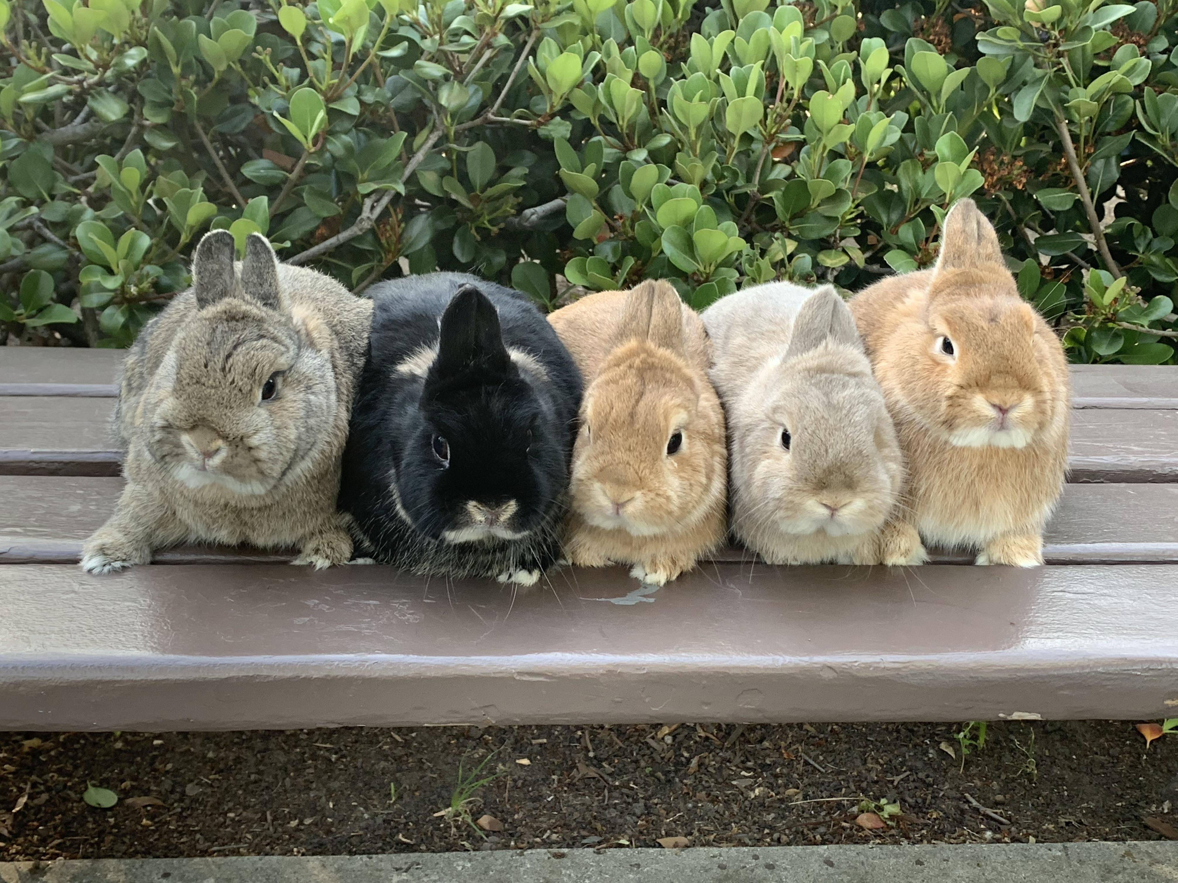 Are Rabbits Easy To Look After Animals For Kids Pets Low Maintenance Pets